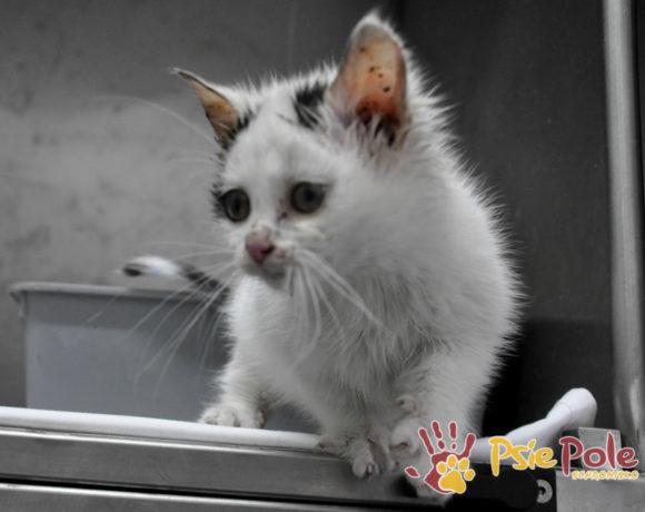 Koteczek LIZAK-rezerwacja