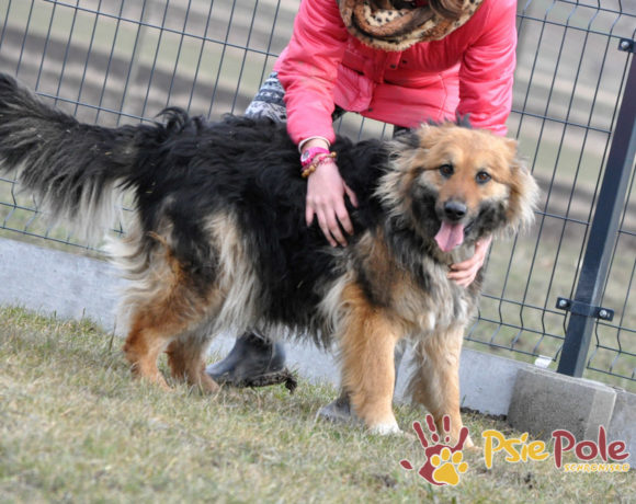 OKSYDA-BELLA