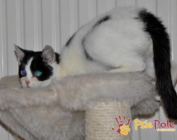 Mała kotka TAFTA