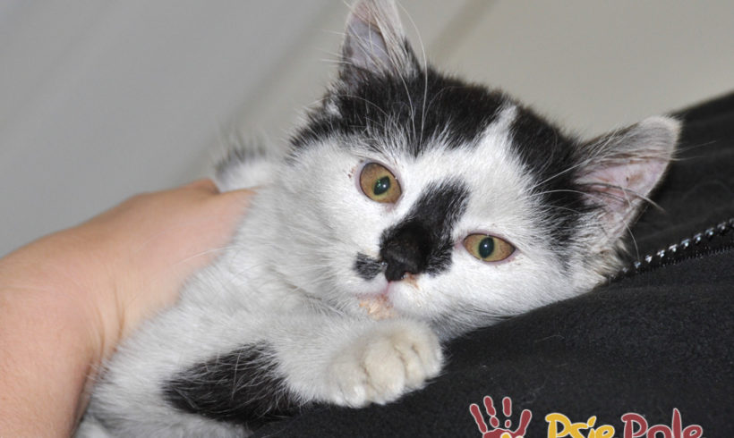 Mała kotka Piniatka – Sawusia