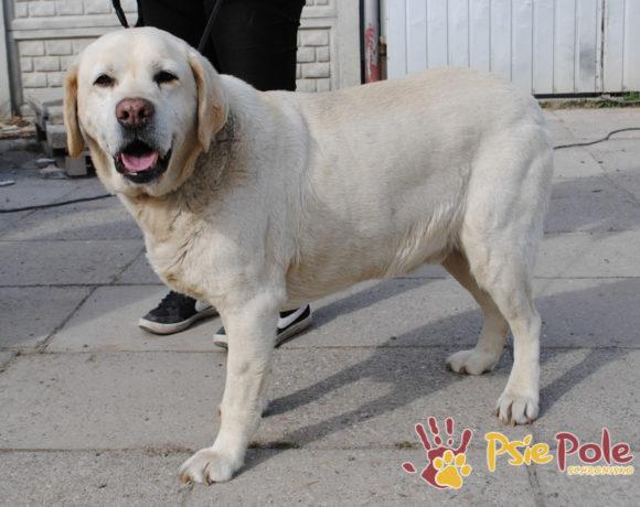 RASTI – Labrador