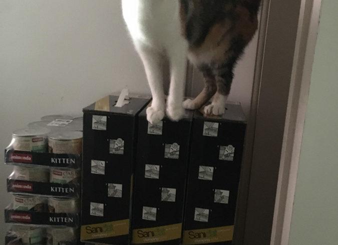 PODARUNKI dla kotków