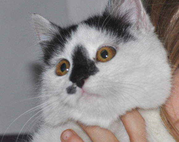 Mała kotka PINIATKA-SAWUSIA