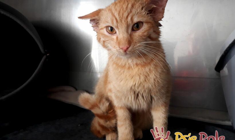 KOTEK RADEMENES – kotek w leczeniu