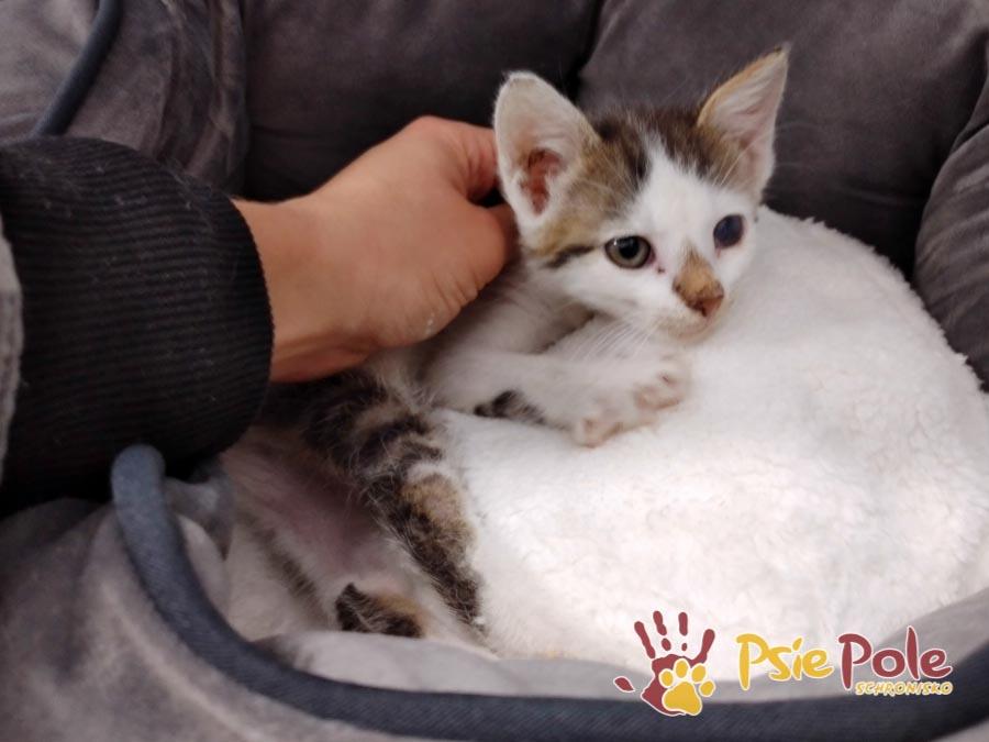 KOTKA KITTY (KITTI)